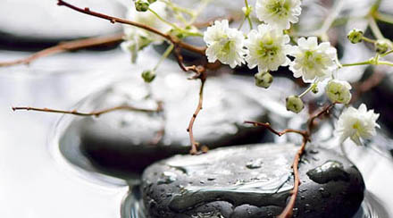 Photo of flat black spa-like stones in shallow water. Two stones are in the forefront with small white flowers and twigs placed over them, and additional stones are in the background. This photo is for holistic dentistry, which is available at My Smile Artist in San Antonio.